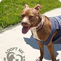 Adopt A Pet :: Deloris Van Cartier - Newport, KY