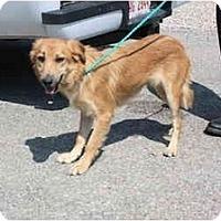 Adopt A Pet :: Kelsey - Toronto/Etobicoke/GTA, ON