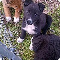 Adopt A Pet :: Eyeore - Harrisburgh, PA