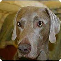 Adopt A Pet :: Jay - Attica, NY