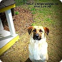 Adopt A Pet :: Nala - Gadsden, AL