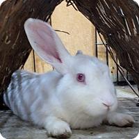 Adopt A Pet :: Trinity - Foster, RI