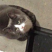 Adopt A Pet :: Cody - Staten Island, NY