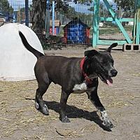 Adopt A Pet :: Benny - Pie Town, NM