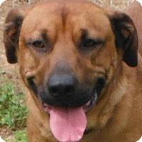 Adopt A Pet :: Ryder - Cedartown, GA