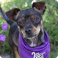 Adopt A Pet :: Georgie - Pacific Grove, CA