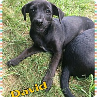 Adopt A Pet :: David - bridgeport, CT