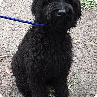 Adopt A Pet :: Oprah - Orlando, FL