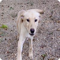 Adopt A Pet :: Nellie meet me 12/2 - Manchester, CT