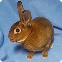 Adopt A Pet :: Calvin - Woburn, MA