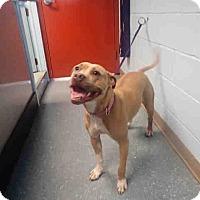 Adopt A Pet :: Pixie - St. Cloud, FL