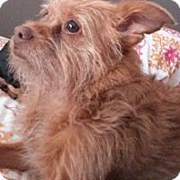 Adopt A Pet :: Sammi - Columbus, OH