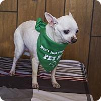 Adopt A Pet :: Jaws - Tavares, FL