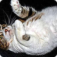 Adopt A Pet :: Sandy - Converse, TX