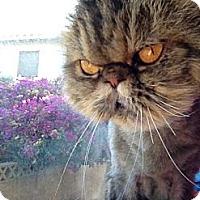 Adopt A Pet :: Tootsie Roll - Beverly Hills, CA