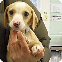 Adopt A Pet :: Tiny - Athens, GA