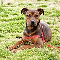 Adopt A Pet :: Rosanna - Tanner, AL