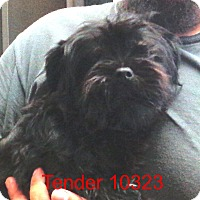 Adopt A Pet :: Tender - Greencastle, NC
