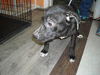Labrador Retriever Mix Dog for adoption in Jasper, Alabama - Lab Mix Puppy