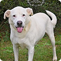 Adopt A Pet :: Bubba - Fort Valley, GA