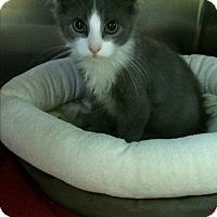 Adopt A Pet :: Pigpen - Richboro, PA