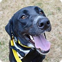 Adopt A Pet :: Liam - Charlotte, NC