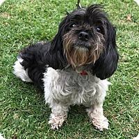 Adopt A Pet :: KASHI - Los Angeles, CA