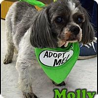 Adopt A Pet :: Molly - Ogden, UT