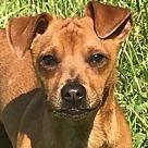 Adopt A Pet :: Kansas