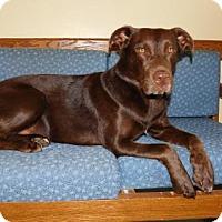 Adopt A Pet :: Rufus - Island Lake, IL