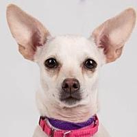 Adopt A Pet :: Cammy - Colorado Springs, CO