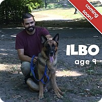 Adopt A Pet :: Ilbo - Vineland, NJ