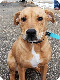 Labrador Retriever/Shar Pei Mix Dog for adoption in Detroit, Michigan - Zoey-Adopted!