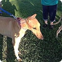 Adopt A Pet :: Rex - Vidor, TX
