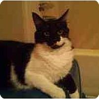 Adopt A Pet :: Romeo - Greenville, SC