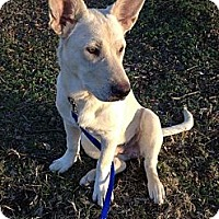 Adopt A Pet :: Apollo - Nashville, TN