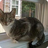 Adopt A Pet :: Veronica - Chicago, IL