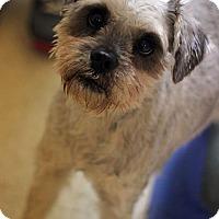 Adopt A Pet :: Trixie - Tinton Falls, NJ