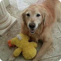 Adopt A Pet :: Buddy - Murdock, FL