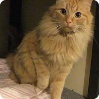 Adopt A Pet :: Olaf - Edmonton, AB