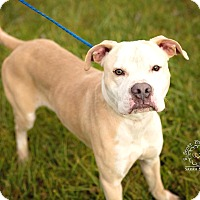 Adopt A Pet :: Stevie - ADOPTED! - Zanesville, OH