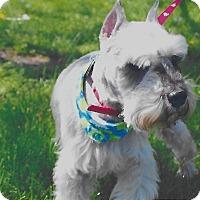 Adopt A Pet :: Bam Bam~~ADOPTION PENDING - Sharonville, OH