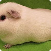 Adopt A Pet :: Dusty - Steger, IL