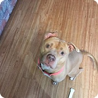 Adopt A Pet :: Bryce - Columbia, MD