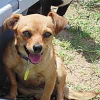 Adopt A Pet :: Stryker - Las Cruces, NM