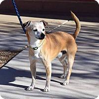 Adopt A Pet :: Leo (Liberty) - Sierra Vista, AZ