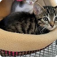 Adopt A Pet :: Pringles - Umatilla, FL