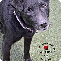 Adopt A Pet :: Sylvie - Youngwood, PA