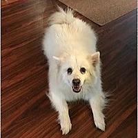 Adopt A Pet :: Jake of FL - Bradenton, FL