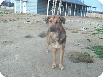 Shepherd (Unknown Type) Mix Dog for adoption in Southampton, Pennsylvania - Nickleby